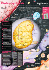 Excellent resources from the Wellcome Trust BIg Picture