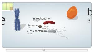 Learn.Genetics cell size