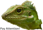 """Java the Tree Dragon says """"Pay Attention!"""""""